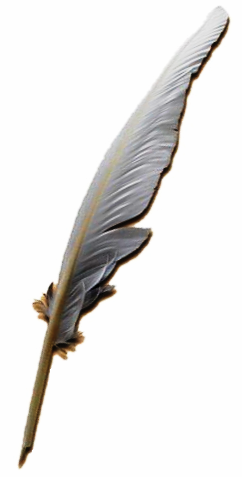 quill pen image
